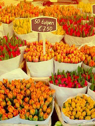 Word City AMSTERDAM FLOWER MARKET