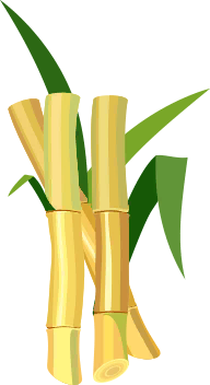 Word Farm SUGAR CANE answers