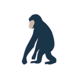 Word Spark Hexa CHIMPANZEE answers